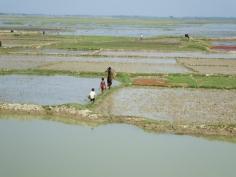 Flooded land - Joykolosh, Sunamganj, Bangladesh